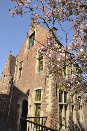 Traditional brick buildings and pink tree at the Great  Beguinage in Leuven, Belgium.