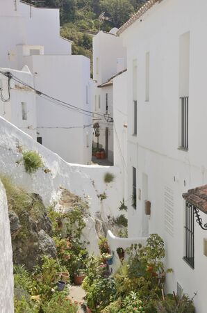Plants at whitewashed alley in Casares, a  mountain village of Malaga province, Andalusia, Spain. 版權商用圖片