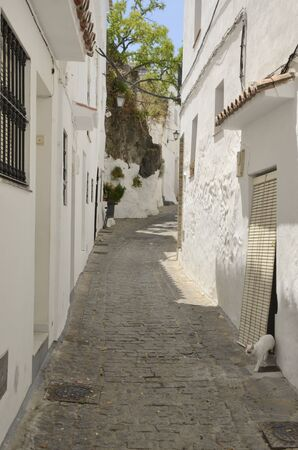 White cat going out of house at cobbled alley of the white village of Casares, Andalusia, Spain. Stock fotó