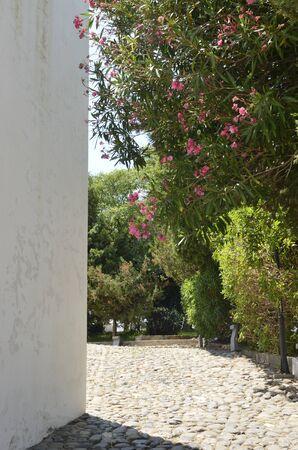 Footpath at garden in Casares, a  mountain village of Malaga province, Andalusia, Spain.Beautiful alley in Casares