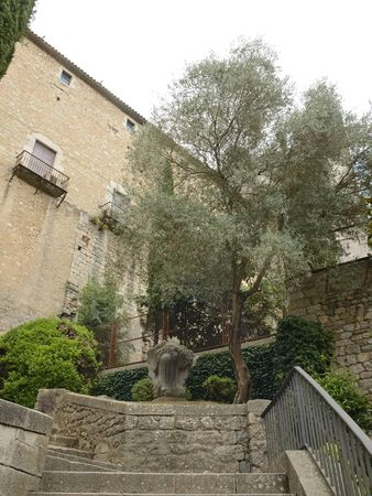 Stone stairs next to olive tree in the old town of Girona,  Catalonia, northeastern Spain.
