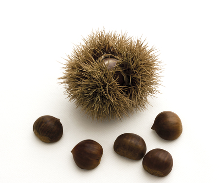 spiky: Chestnuts and spiky cupule