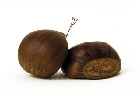 chestnuts: Two chestnuts