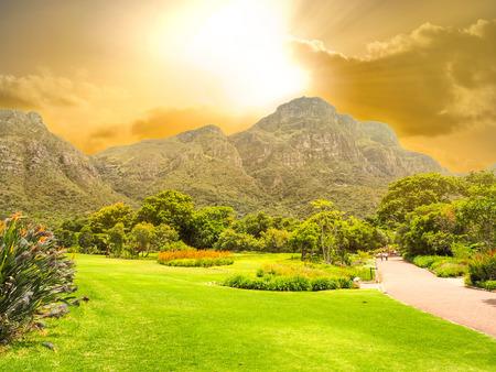 Kirstenbosch 국립 식물원은 세계의 위대한 식물원, 케이프 타운, 남아 프리카 공화국, 산과 석양 배경으로 녹색 필드 중 하나로 찬사를받습니다 스톡 콘텐츠