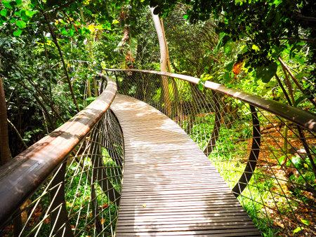Kirstenbosch 국립 식물원의 나무 캐노피 산책로 (목조 다리)는 금빛 하늘 배경, 케이프 타운, 남아 프리카 공화국과 함께 세계의 위대한 식물원 중 하나로