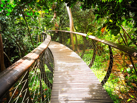 Tree Canopy Walkway (wooden bridge) in Kirstenbosch National Botanical Garden is acclaimed as one of the great botanic gardens of the world with gold light sky background, Cape Town, South Africa Stock Photo