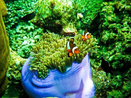 The beauty of the sea. Stock Photo - 7689056