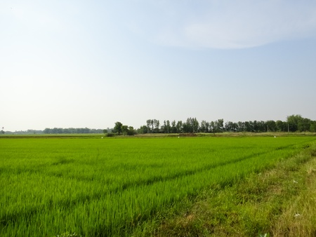 Planting rice in the rice fields Stock Photo - 9457740