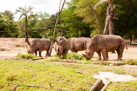 His big green rhinoceros at a zoo in Thailand