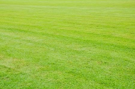 Grass and grass photo