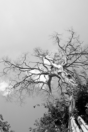 Tree in black and white. photo
