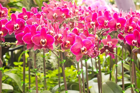 Pink flowers in the tropics  photo