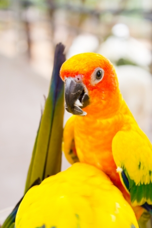Parrots in the wild photo