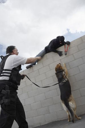 security vest: Security guard with dog catching thief