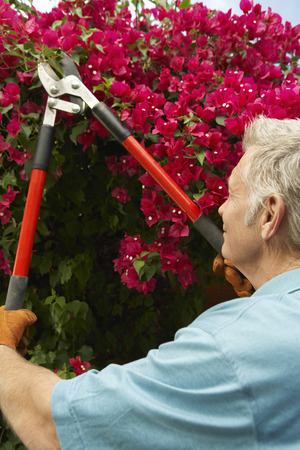 Man pruning flowers in garden Stock Photo - 3812526