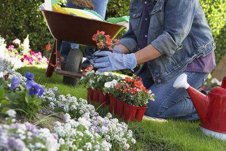 carretilla: Mujer de plantar flores en el jard�n, bajo la secci�n