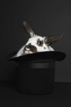 Rabbit in top hat, studio shot Reklamní fotografie - 3812751
