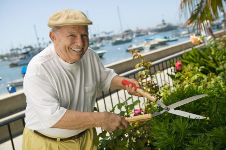domestic task: Senior Man Trimming Hedge