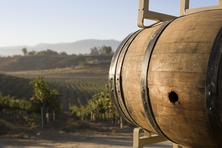 winemaking: Wine barrel in vineyard