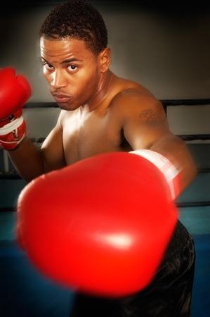 Boxer Stock Photo - 5404432
