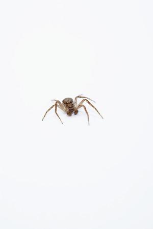 Lone Spider Stock Photo - 5487792