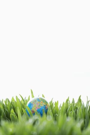 Small Globe in Grass Stock Photo - 5487798