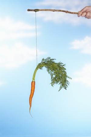 Person Dangling Möhre Von Stick