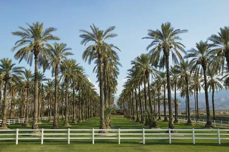 no kw 1: Rows of Palm Trees
