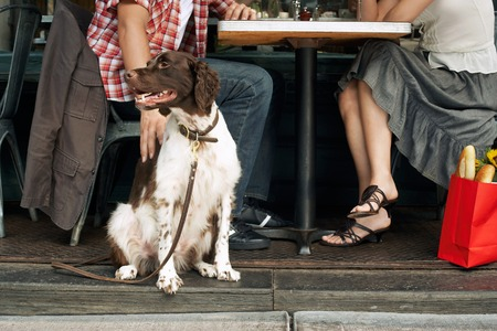canid: Dog and Owners Sitting at Sidewalk Cafe LANG_EVOIMAGES