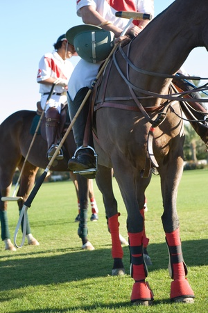 polo player: Polo Players mounted on polo ponies low section LANG_EVOIMAGES