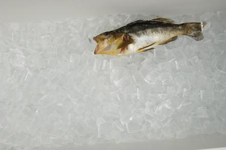 Fish on ice Stock Photo - 8837304