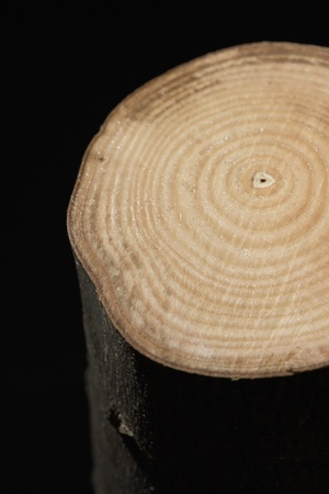 Log Out: Cross Section of Tree Trunk