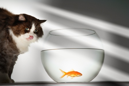 Cat looking at goldfish in fishbowl LANG_EVOIMAGES