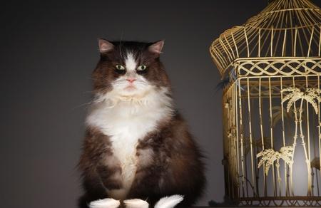 Cat sitting next to empty birdcage