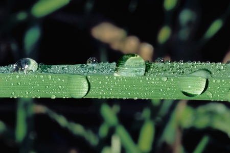 Water Droplets on Leaf Stock Photo - 12514012