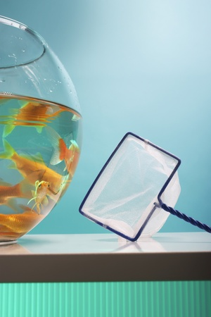 Goldfish Bowl and Net Stock Photo - 12514101