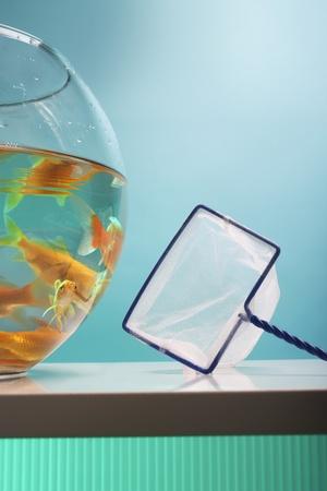 cypriniformes: Goldfish Bowl and Net