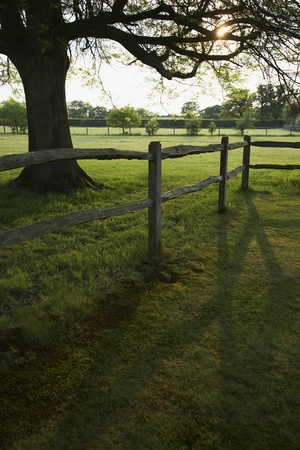 Wooden fence and tree on field Stock Photo - 12737470