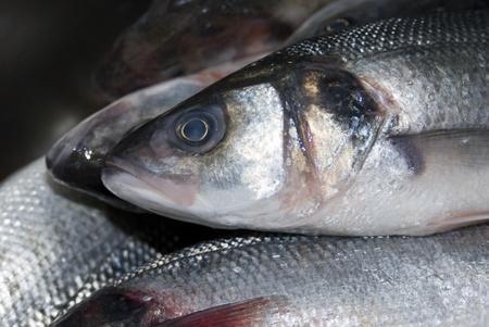 Pile of fresh fish close-up Stock Photo - 12737859