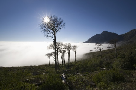 View of the Devils Peak from the foot of Table Mountain Stock Photo - 12738245