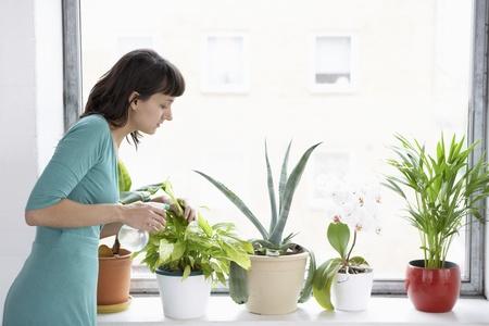 houseplants: Woman Watering Houseplants LANG_EVOIMAGES