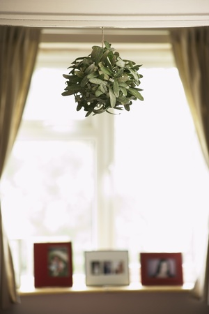 House plant hanging from ceiling Stock Photo - 19075890