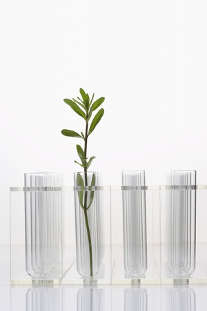 Plant in test tube with three empty test tubes Stock Photo - 18884841