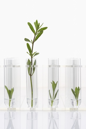 Large plant with three small plants in test tubes Stock Photo - 18884847