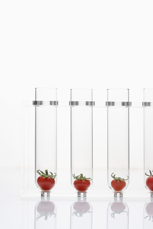 Tomatoes in test tubes Stock Photo - 18884757