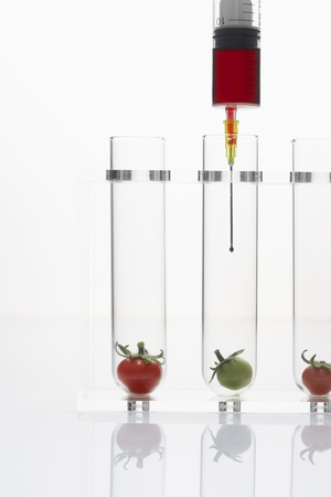 Syringe injecting red and green tomatoes in test tubes Stock Photo - 18884772