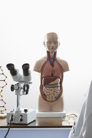 Human anatomy model and microscope Stock Photo - 18884878