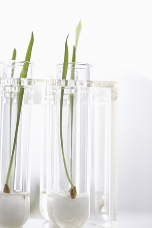 Seedlings growing in test tubes Stock Photo - 18884809