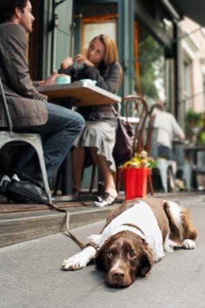 pet photography: Dog Lying on Sidewalk Outside Sidewalk Cafe