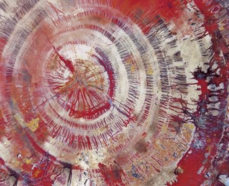 petrified: Petrified wood close-up LANG_EVOIMAGES